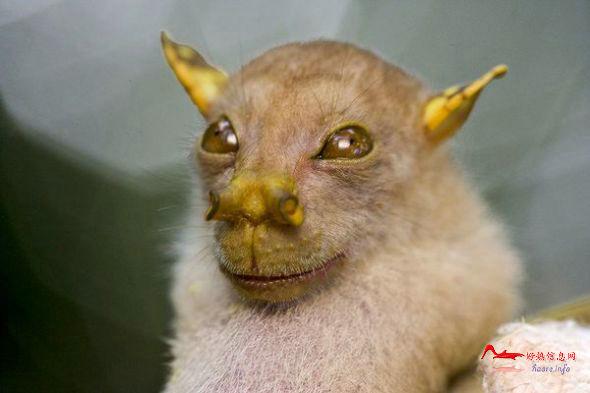 gydw5 国家地理评选10大怪异动物排行
