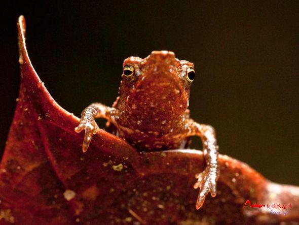 gydw7 国家地理评选10大怪异动物排行