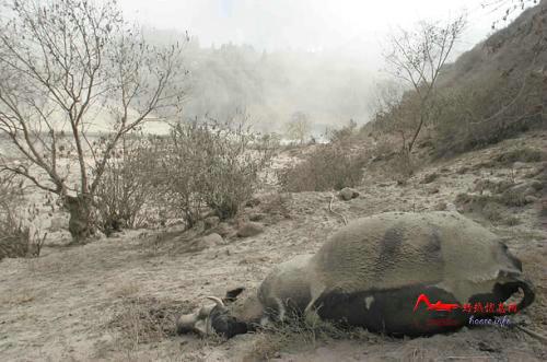 hs6 世界上最剧烈的十大火山喷发排行榜