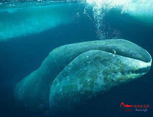 csdw6 世界十大最长寿动物