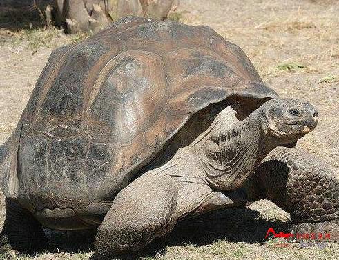 csdw7 世界十大最长寿动物