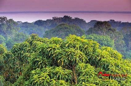 rdyl1 世界上最美的十大热带雨林