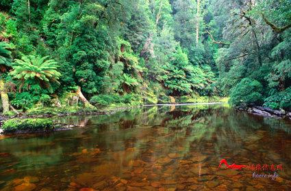 rdyl10 世界上最美的十大热带雨林