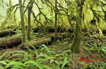 rdyl2 世界上最美的十大热带雨林