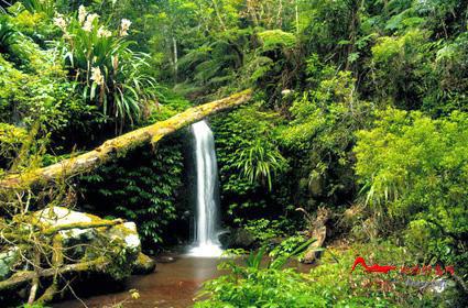rdyl3 世界上最美的十大热带雨林