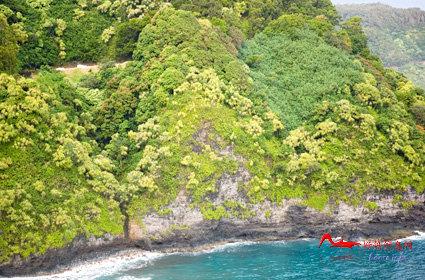 rdyl5 世界上最美的十大热带雨林