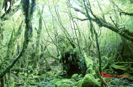rdyl7 世界上最美的十大热带雨林
