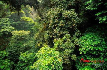 rdyl8 世界上最美的十大热带雨林